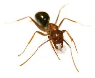 Pests – Ark Pest Control