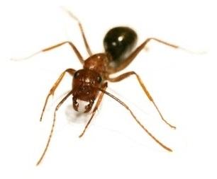 Ark Pest Control – London Pest Control Services