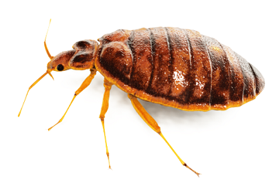 Ark Pest Control London Pest Control Services