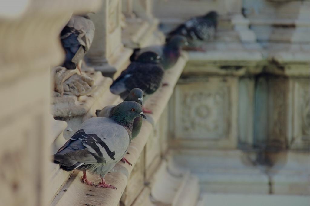 bird-controlr
